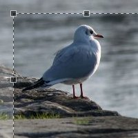 How to Create a jQuery Image Cropping Plugin from Scratch – Part I
