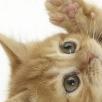 20 Ways to Save Kittens and Learn PHP
